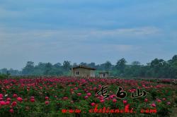 长白山六月正是看花赏花季节!