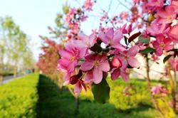 清晨,长白山小镇上走走停停,赏花,观花,错过要再等一年!!
