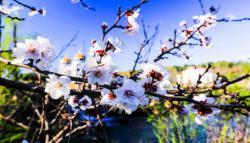 还在等什么,春花已经灿烂多姿