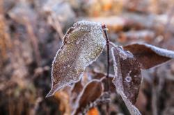 今天一早起来,一场的霜冻!!