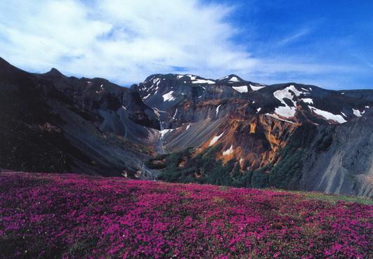 植物王国——长白山的高山苔塬 - 碧海蓝天 - 碧海蓝天 的博客