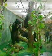 <a href=http://www.cbstianchi.com target=_blank class=infotextkey>长白山</a>自然博物馆