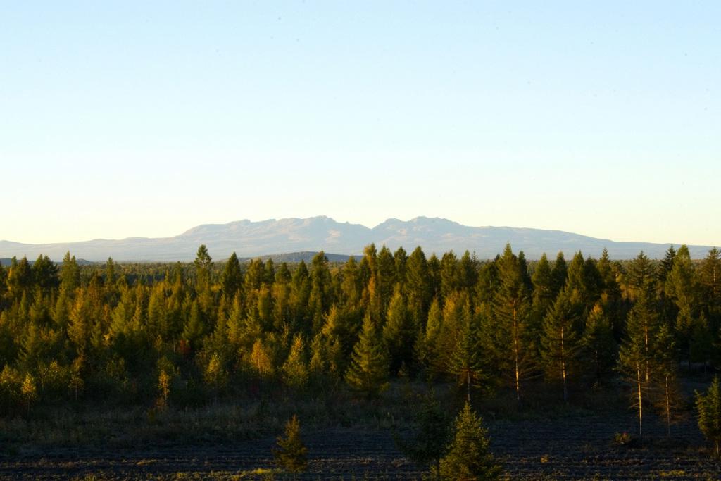 红叶脱去绿意换新颜,婀娜的红枫树,秀丽的白桦林,挺拔的黄花松,墨绿的